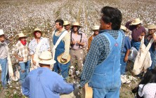 Cotton Field Workers